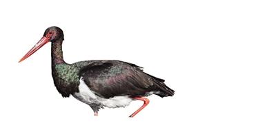 《【摩登3平台登录地址】596种 《北京陆生野生动物名录》发布鸟类503种、兽类63种、两栖爬行类30种;126种列入《国家重点保护野生动物名录》》