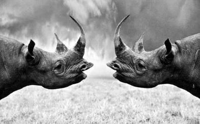 《【摩登3h5登陆地址】编译 联合国在云南开会 为未来全球生物多样性保护设定目标和路径 地球正经历第6次物种大灭绝 平均每小时就有一个物种灭绝》